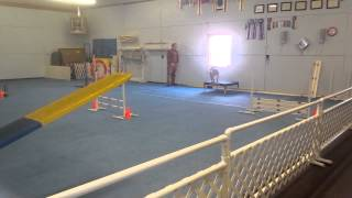 Darin And Chinese Shar-pei Really Running Ukc Agility Level 3 Trial 2