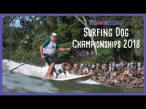 2018 VetShopAustralia Surfing Dog Championships