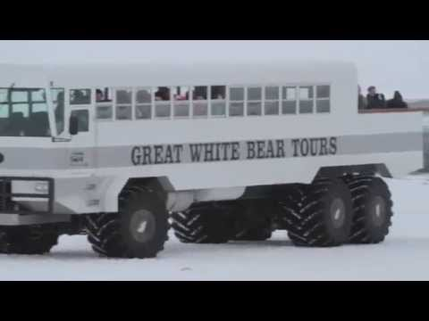 Great White Bear Tours