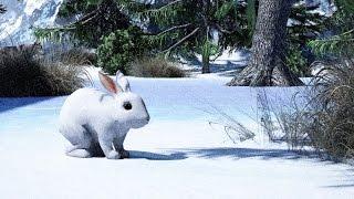 Как заяц зимой живет? Детям про животных.