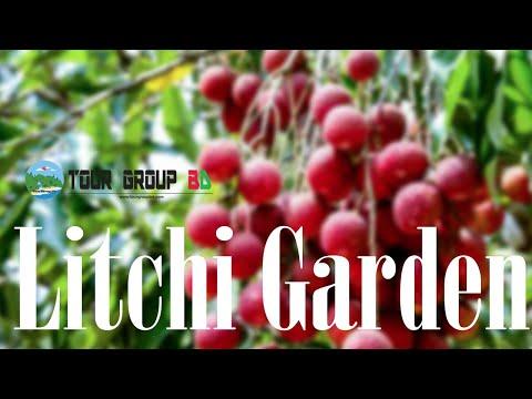 Lichi garden at Dinajpur with Tour Group BD