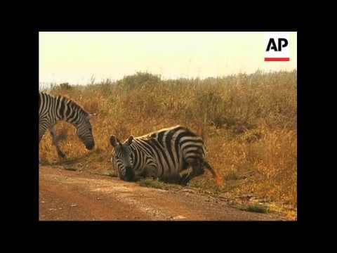 Kenya's tourist industry is declining because of troubles