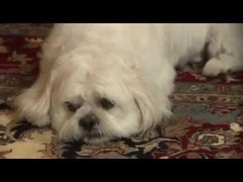 Millie (1931) PRE-CODE HOLLYWOODKaynak: YouTube · Süre: 1 saat24 dakika32 saniye