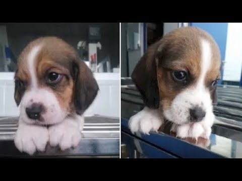 China's first cloned dog in good shape