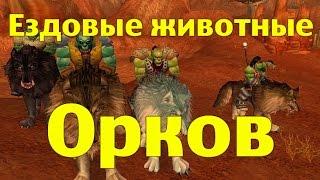 Ездовые животные Орков или где купить стремительных Волков