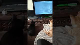 CATS WATCHING HORROR MOVIE