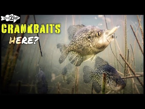 How To Catch Crappies Casting Micro Crankbaits
