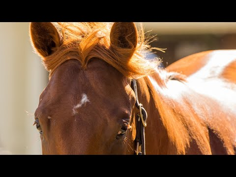 2019 Adelaide Yearling Sale Day 1 (Live Stream Archive)