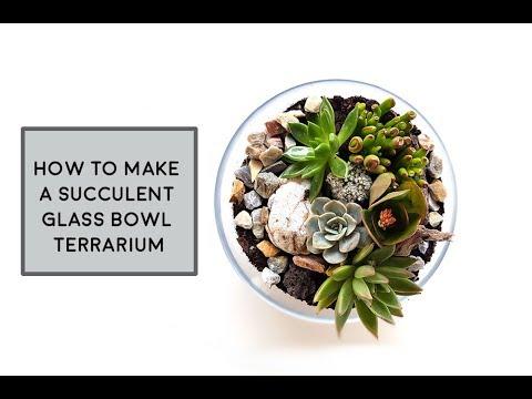 How To Make A Succulent Glass Bowl Terrarium Youtube