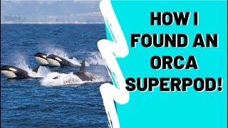 Alaska Whale Watching Ultimate Guide- Humpback, Orca, Beluga - How 2 Travelers