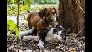 Mascotas: ¿darles o no comida natural?, ¿cada cuánto bañarlas? | Noticias Caracol