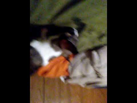 Download My dog reactits to a figit spiner part 1