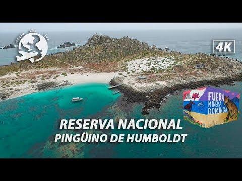 NO a la minera Dominga | Isla Damas y la Reserva Nacional Pinguino de Humboldt