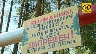 В лесах Беларуси усилены меры пожарной безопасности(, 2015-08-15T18:34:56.000Z)
