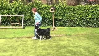 East London Dog Training