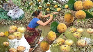 Women with rabbits found santol in the river for eat - Eating delicious