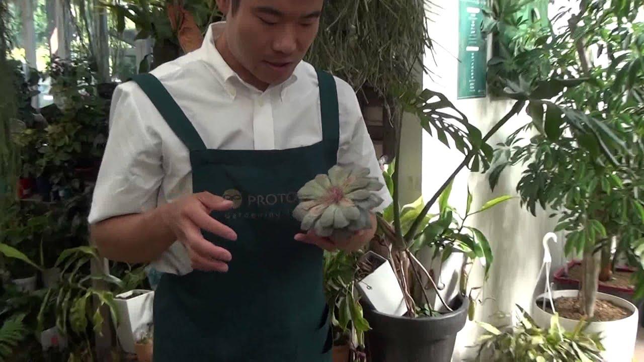 苗 方 多肉 植物 カット 育て