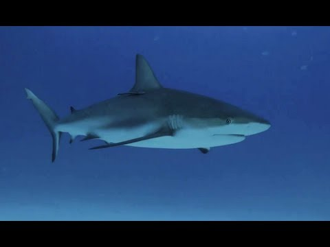 Sanctuary: Last Stand for Sharks in Micronesia | Pew