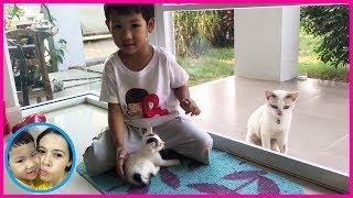 แม่บี น้องบีม | น้องบีมให้อาหารแมว