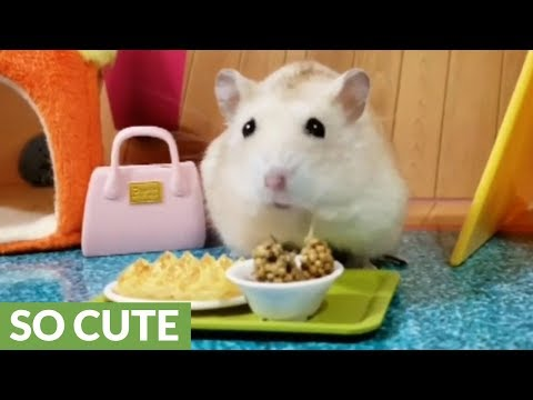 Tiny hamster plays in his tiny fort