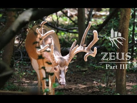 Suburban Bowhunter | Zeus: part 3