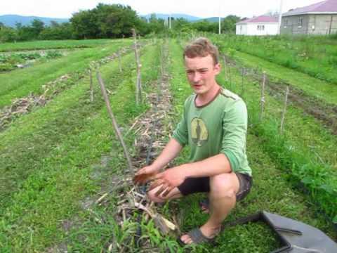 видео: Умный огород Карпухина Виталия
