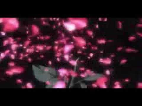rozen ouver OP