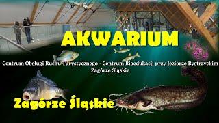 Gambar cover Akwarium w Zagórzu Śląskim. Centrum Turystyczne - Bioedukacji przy Jeziorze Bystrzyckim