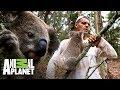 Koala intenta subir en Frank | Wild Frank: Tras la evolución de las especies | Animal Planet