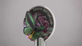 CIT - Exotic Butterflies
