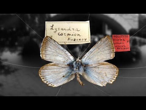 Nabokov's Butterflies – Shelf Life 360