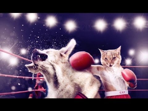 Crazy cat vs Dog fight - Funny cats sneezes Compilation 2017
