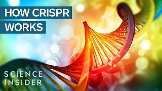 CRISPR DNA Editing System In 90 Seconds