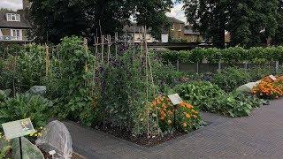 Студенческий огород вЛондоне