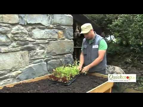 Planting Vegetables In A Vegtrug Raised Planter
