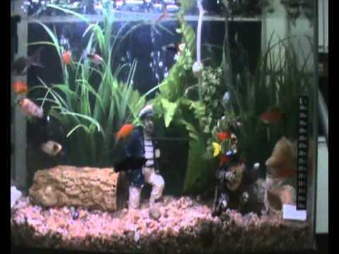 Acuario peces tropicales espadas y lebistes pecera for Peces tropicales acuario