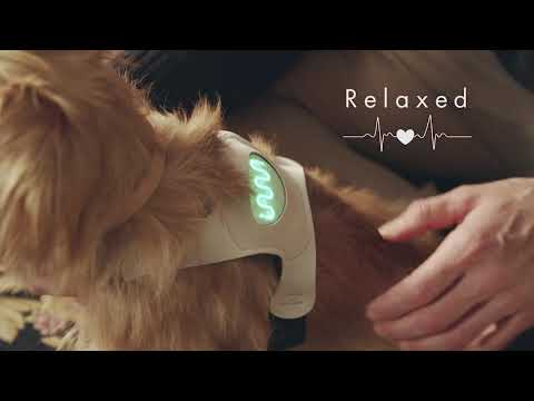 Inupathy - the device that can reveal your dog's mood - CES 2020