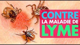 Comment prévenir et lutter contre la maladie de Lyme