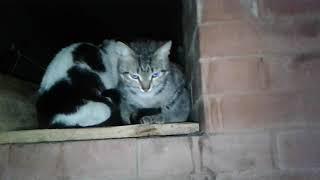 Котята греют попы на горячей печке