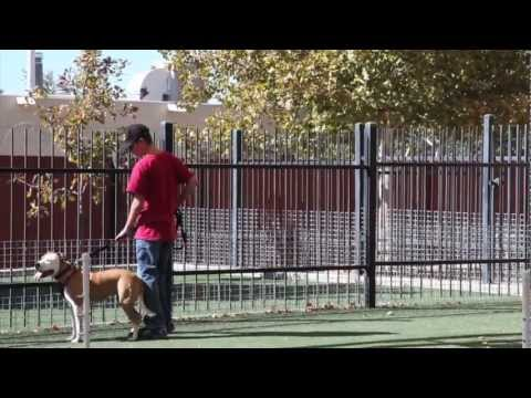 Understanding Pitbulls: A Nasty Message about dogs