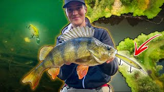 PERCH FISHING With Crankbaits in Small River (INSANE FISHING) | Team Galant