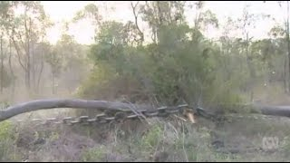 Newman's land clearing laws still in place with suspected panic clearing
