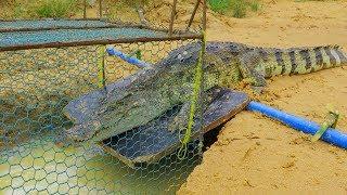 Creative Man Make Best Crocodile Trap Technology - Big Crocodile Trap Work 100%