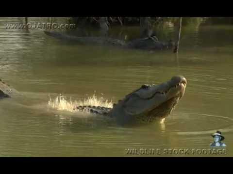 The Love Doctors - Gator Makes Water Vibrate!