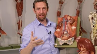 Ureters (anatomy)