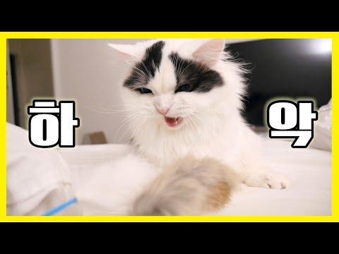 하악 쵸비 - 오뎅꼬치 킬러 고양이