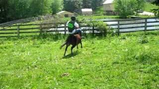 Pro Pony Rider