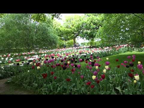 Tulip Mania at Keukenhof | HuffPost Life