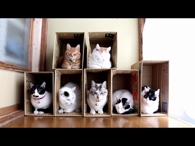 7つの箱と7匹の猫 Box and cat 2018#7