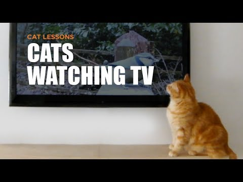 Cats Watching YouTube